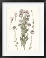 Framed Pressed Blooms I