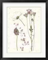 Framed Pressed Blooms II