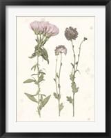 Framed Pressed Blooms III