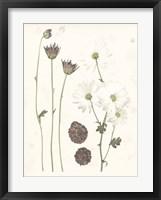 Framed Pressed Blooms IV