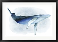 Framed Watercolor Humpback I
