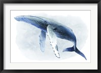 Framed Watercolor Humpback II