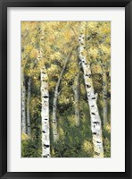 Framed Birch Treeline III