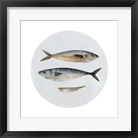 Framed Three Fish I