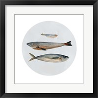 Framed Three Fish II