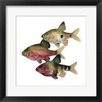 Framed Rainbow Fish I