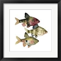 Framed Rainbow Fish II