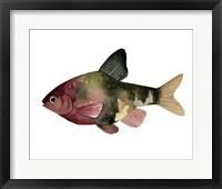 Framed Rainbow Fish IV
