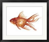 Framed Ornamental Goldfish I