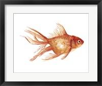 Framed Ornamental Goldfish II