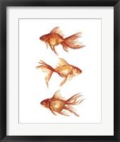 Framed Ornamental Goldfish III