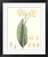 Framed Soft Tropical VII