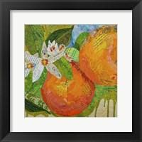 Framed Florida Oranges