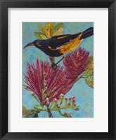 Framed Hawaiian Bird III