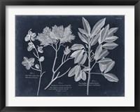 Framed Foliage on Navy VI