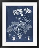 Botanical in Indigo III Framed Print