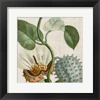 Framed Cropped Turpin Tropicals II