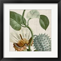 Cropped Turpin Tropicals II Framed Print