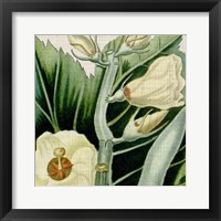 Framed Cropped Turpin Tropicals III
