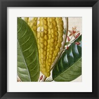 Framed Cropped Turpin Tropicals VI