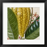 Cropped Turpin Tropicals VI Framed Print