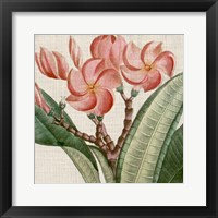 Cropped Turpin Tropicals VII Framed Print
