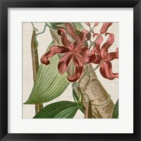 Cropped Turpin Tropicals IX Framed Print