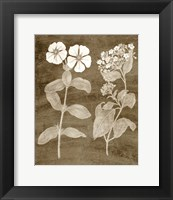 Framed Botanical in Taupe IV