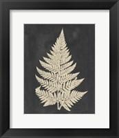 Framed Linen Fern I
