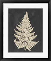 Framed Linen Fern I