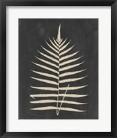 Linen Fern III Framed Print