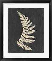 Linen Fern IV Framed Print