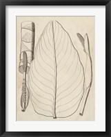 Framed Distinctive Leaves III