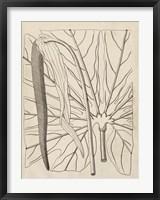 Framed Distinctive Leaves IV
