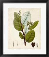Framed Verdant Foliage I