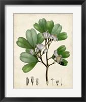 Framed Verdant Foliage III