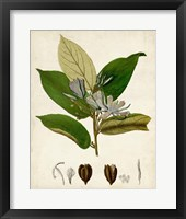 Framed Verdant Foliage IV