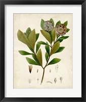 Framed Verdant Foliage V
