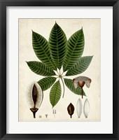 Framed Verdant Foliage VII