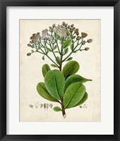 Framed Verdant Foliage VIII