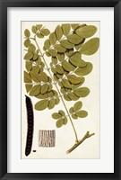 Framed Leaf Varieties I