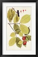 Framed Leaf Varieties II
