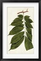 Framed Leaf Varieties III