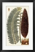 Framed Leaf Varieties IV