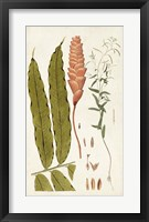 Framed Leaf Varieties VII