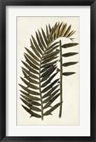 Framed Leaf Varieties VIII
