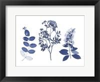 Framed Indigo Pressed Florals I