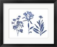 Framed Indigo Pressed Florals II