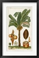 Framed Exotic Palms VII