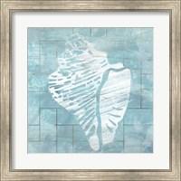 Framed Cerulean Shell III